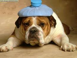 כאב ראש של כלב